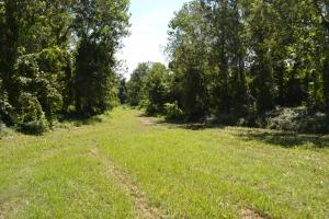 1,110 Acres Bottomland Hardwoods on the Mississippi River in Phillips, AR (54 of 76)
