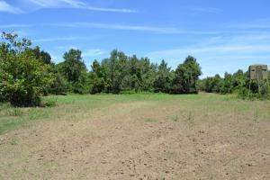 1,110 Acres Bottomland Hardwoods on the Mississippi River in Phillips, AR (56 of 76)