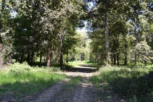 1,110 Acres Bottomland Hardwoods on the Mississippi River in Phillips, AR (57 of 76)