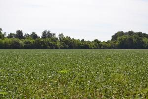 1,110 Acres Bottomland Hardwoods on the Mississippi River in Phillips, AR (58 of 76)