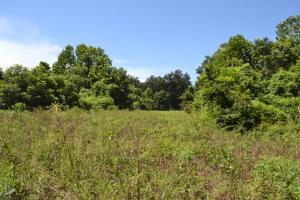 1,110 Acres Bottomland Hardwoods on the Mississippi River in Phillips, AR (62 of 76)