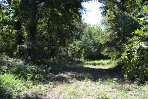 1,110 Acres Bottomland Hardwoods on the Mississippi River in Phillips, AR (64 of 76)