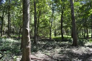 1,110 Acres Bottomland Hardwoods on the Mississippi River in Phillips, AR (66 of 76)