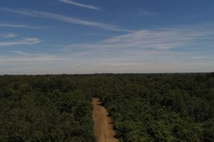 1,110 Acres Bottomland Hardwoods on the Mississippi River in Phillips, AR (12 of 76)