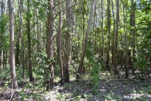 1,110 Acres Bottomland Hardwoods on the Mississippi River in Phillips, AR (67 of 76)