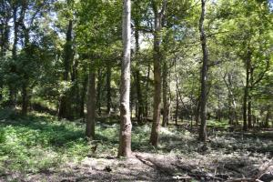 1,110 Acres Bottomland Hardwoods on the Mississippi River in Phillips, AR (68 of 76)