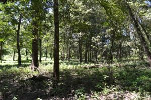 1,110 Acres Bottomland Hardwoods on the Mississippi River in Phillips, AR (70 of 76)