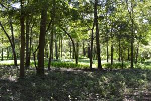1,110 Acres Bottomland Hardwoods on the Mississippi River in Phillips, AR (5 of 76)