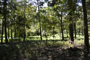 1,110 Acres Bottomland Hardwoods on the Mississippi River in Phillips, AR (71 of 76)