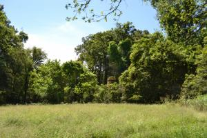 1,110 Acres Bottomland Hardwoods on the Mississippi River in Phillips, AR (63 of 76)