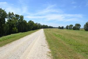 1,110 Acres Bottomland Hardwoods on the Mississippi River in Phillips, AR (76 of 76)