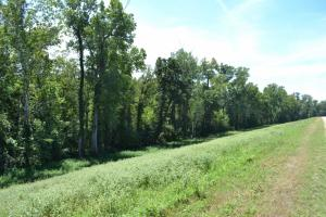 1,110 Acres Bottomland Hardwoods on the Mississippi River in Phillips, AR (75 of 76)