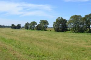 1,110 Acres Bottomland Hardwoods on the Mississippi River in Phillips, AR (74 of 76)