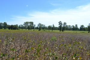 1,110 Acres Bottomland Hardwoods on the Mississippi River in Phillips, AR (72 of 76)