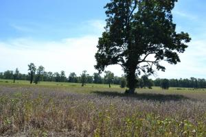 1,110 Acres Bottomland Hardwoods on the Mississippi River in Phillips, AR (73 of 76)