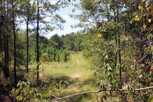 Fellowship Rd Hunting and Timberland - Barnwell County SC