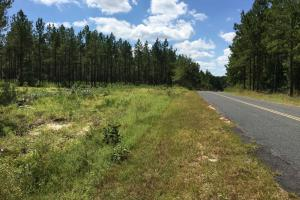 Residential Tract with Mature Timber - Aiken County SC