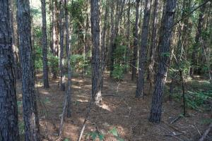 Union Road Homesite, Pasture, and Hunting - Tuscaloosa County AL