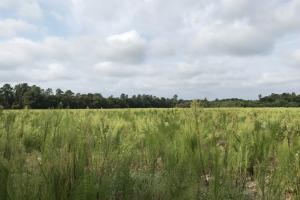 Roseboro Hunting Farm Land - Sampson County NC
