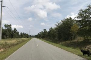 Marion-Amos Rd Homesite - Sampson County NC