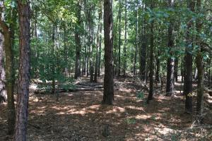 Blacks Rd Hunting & Recreational Tract
