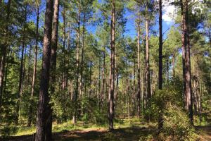 Recreational Timber Investment - Wilkes County GA