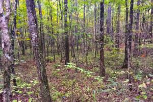 Calera Hunting and Timber Investment  - Shelby County AL