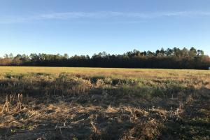Sunset Farm & Ranch - Escambia County AL