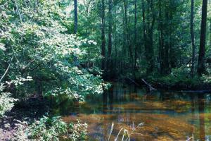 Little Salkehatchie Recreational Tract - Bamberg County SC