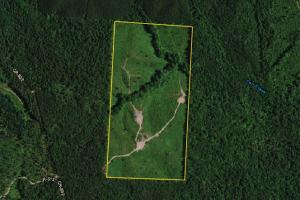 Carr Creek Timber Investment - Cleburne County AL