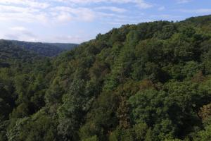Beautiful 10 Acre Plateau Property - Morgan County TN