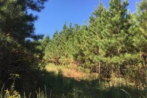 National Forest Rec and Pine Investment