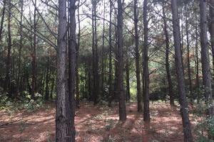 Wooded Homesite - Montgomery County AL