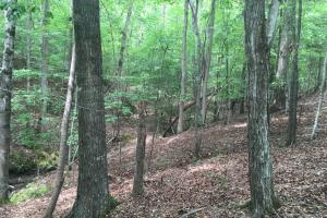 Chester Hunting and Recreational Land