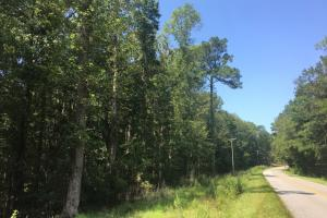 Huger National Forest 10 Acres - Berkeley County SC