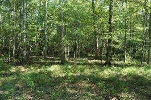 Kings Landing Outstanding Hunting and Timber Investment - Dallas County AL