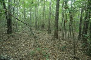Marion Hunting and Timber Investment - Perry County AL