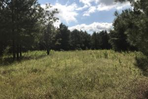Lee Creek Hunting and Timber tract - Conecuh County AL