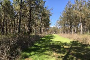 Mid Rotation Pine Investment - Holmes County MS