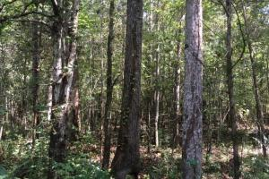 Tallasseehatchee Creek Timber & Farm Tract - Calhoun County AL