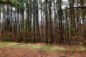 20 Wheeler Wooded Lot B - DeSoto County MS