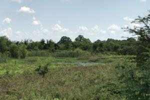955+/- Acre WRP Recreational Duck & Deer Hunting Property - Chicot County AR