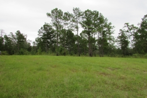 131 Acres Clay County Hunting / Timber Investment in Clay, GA (38 of 79)