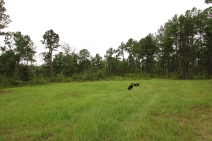 131 Acres Clay County Hunting / Timber Investment in Clay, GA (27 of 79)