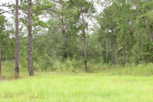131 Acres Clay County Hunting / Timber Investment in Clay, GA (25 of 79)