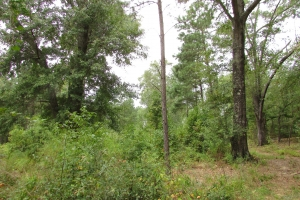 131 Acres Clay County Hunting / Timber Investment in Clay, GA (26 of 79)