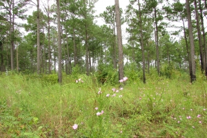 131 Acres Clay County Hunting / Timber Investment in Clay, GA (24 of 79)