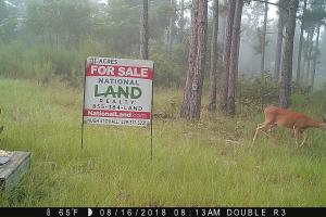 131 Acres Clay County Hunting / Timber Investment in Clay, GA (19 of 79)