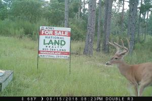 131 Acres Clay County Hunting / Timber Investment in Clay, GA (18 of 79)