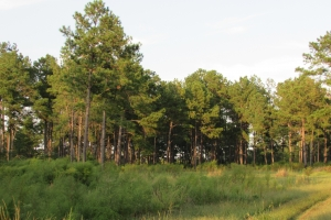 131 Acres Clay County Hunting / Timber Investment in Clay, GA (39 of 79)
